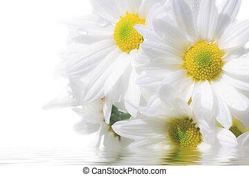 水, 花, 反映
