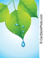 水, 落ちる, 葉