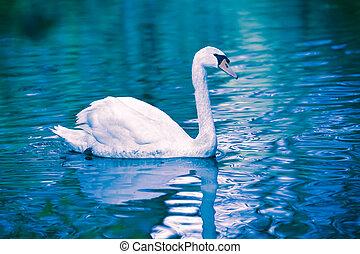 水, 贵族, 天鹅, 反映