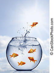 水, 金魚, 跳躍, から