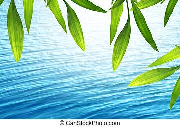 水, 青い背景, 竹, 美しい