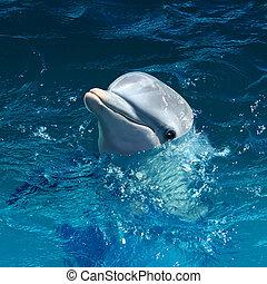水, 頭, イルカ, から