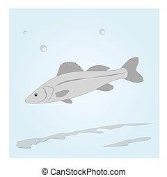 水, fish