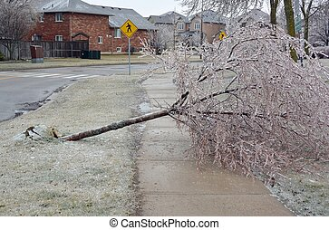 氷, 雨, 損害