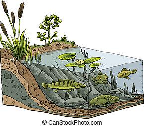 池塘, 岸, 短剖面