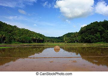 池, アジア人, 風景