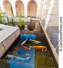 池, コイ, 魚, koi, カラフルである, 日本