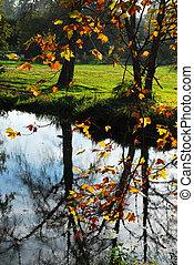 池, 中に, ∥, 森林