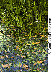 池, 中に, 秋