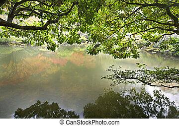 池, 反射, 庭の日本人