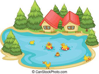 池, 子ガモ