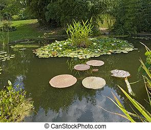 池, 日当たりが良い