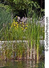 池, 春, waterplants, 朝