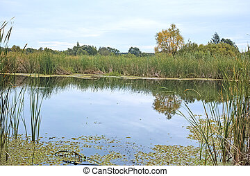 池, 静寂