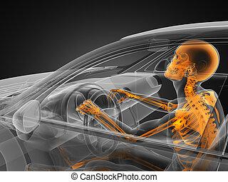 汽車, 概念, 駕駛員, 透明