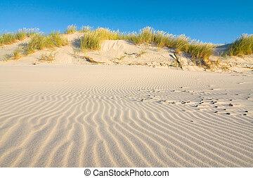 沙丘, 在上, 海滩, 在, 日落