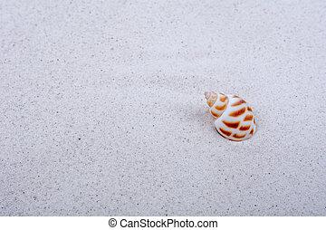 沙子, 殼, 背景, 海