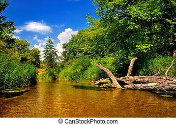 河, 在, 森林, 上, a, 陽光充足的日