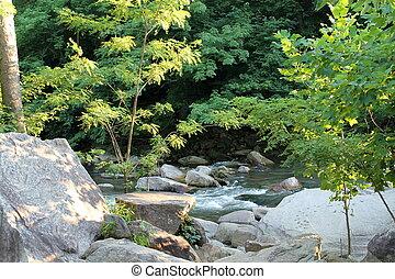 河, 在, the, 森林
