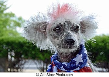 波頭を立てた, 愛国心が強い, 犬, 中国語, 毛のない