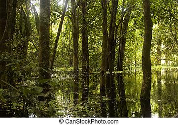 泥地, アマゾン rainforest
