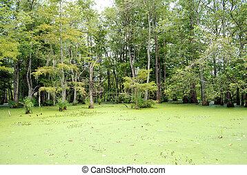 泥地, ルイジアナ, 緩流河川