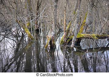 泥地, 死んだ木