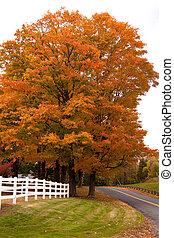 活気に満ちた, 木, 群葉, かえで, 秋