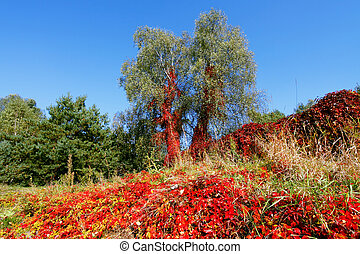 活気に満ちた, 色, 秋