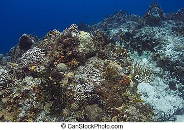 活潑, 珊瑚礁