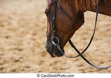 活躍の舞台, 馬