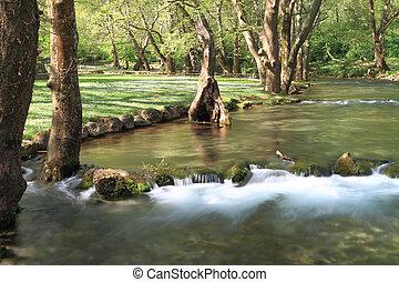 流動的水, 透過, 酒, 森林, 植物