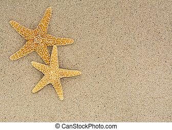 浜の 砂, 背景, 2, ヒトデ