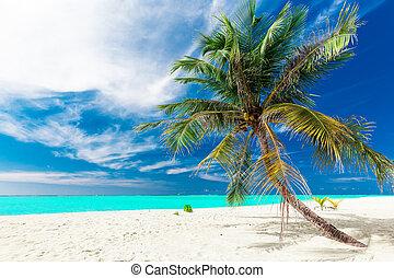 浜, ココナッツ, モルディブ, 活気に満ちた, 木, トロピカル, 単一, やし, 白