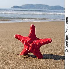 浜, ヒトデ, トロピカル, 日当たりが良い, 赤