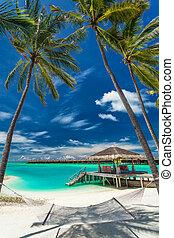 浜, モルディブ, 木, トロピカル, ハンモック, やし, ∥間に∥