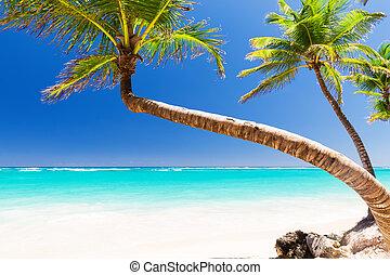 浜, ヤシの木, ココナッツ, 砂, 白