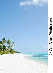 浜, ヤシの木, パラダイス