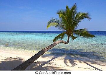 浜, ヤシの木, 鳥, 魅了