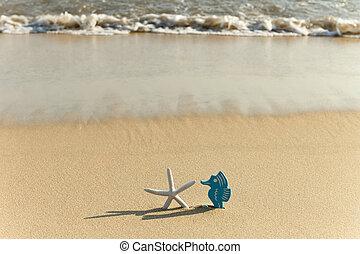 浜, 到来, タツノオトシゴ属, 前部, 波, ヒトデ