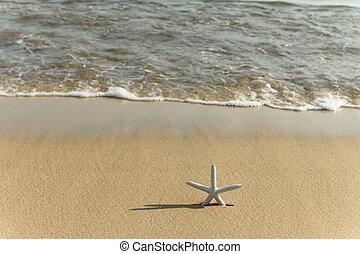浜, 到来, 前部, 波, ヒトデ