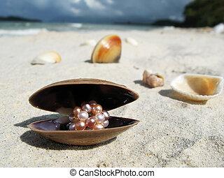 浜, 島, マレーシア, 貝殻, langkawi