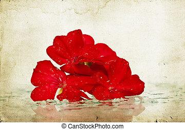 浪漫, 背景, 在中, 红的花
