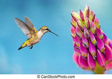 浮かぶこと, ハチドリ, ピンク, 終わり, 花