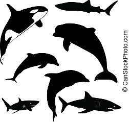 海哺乳動物, 以及, 鯊魚