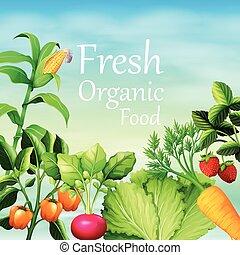 海報, 設計, 由于, 很多, 蔬菜
