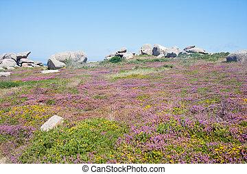 海岸, 岩が多い, カラフルである, ブリタニー, heath, フランス