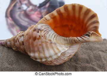 海殼, 上, 灰色, 沙子, 上, a, 背景, ......的, a, 熱, sky.