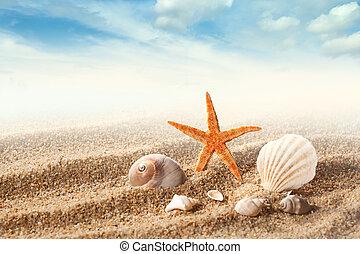 海殼, 在沙子上, 針對, 藍色的天空