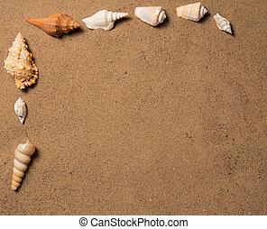 海殼, 由于, 沙子, 如, 背景